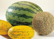 Meloen1